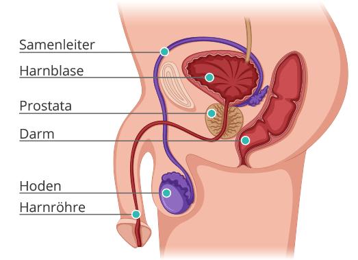 selpers Beschriftete Prostata