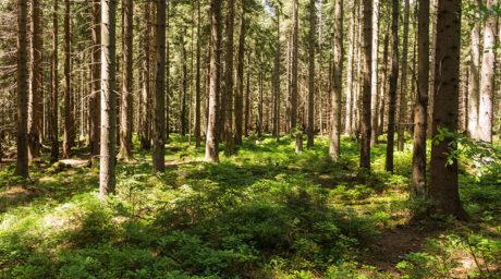 Waldbaden für die Gesundheit