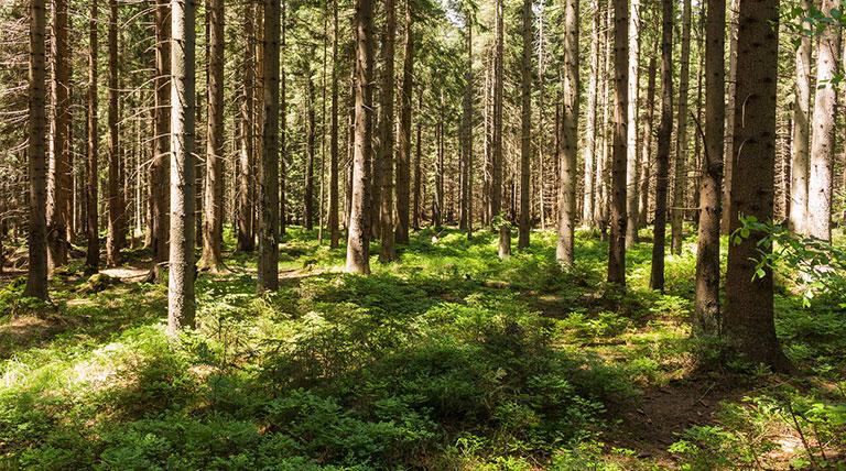Waldtherapie-Waldbaden-Österreich-Deutschland-Schweiz-chronisch-Krank