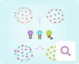 Nachweismethoden für Blutkrebs: Immunphänotypisierung