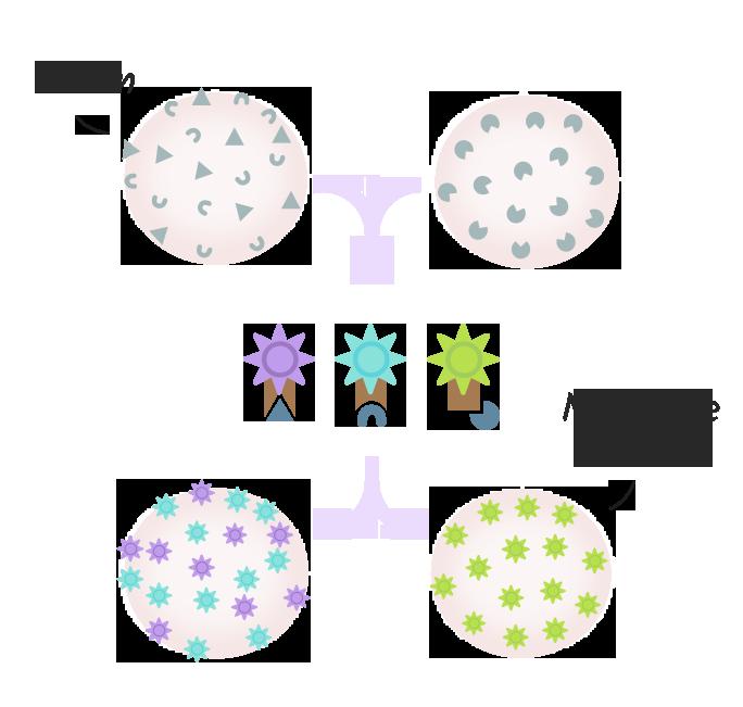 Minimale Resterkrankung bei Blutkrebs: Immunphaenotypisierung