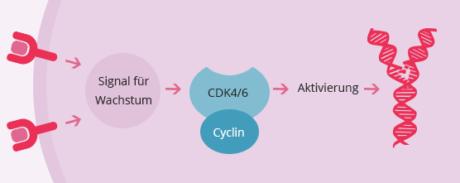 CDK4-6-Inhibitoren Aktivierung