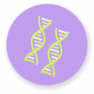Icon DNA